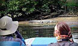 People in boat watching crocodile on bank of Daintree River