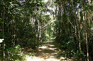 Pathway through the rainforest at Daintree Valley Haven