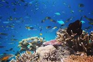 Coral and fish, Great Barrier Reef